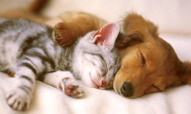 спят котенок и щенок